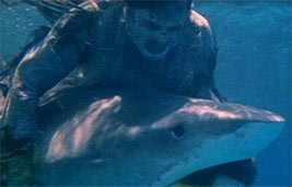 Zombie Flesh Eaters Shark